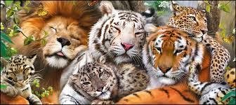 لاک ڈاؤن کے باعث جانوروں کے غیر قانونی شکار میں اضافے کا خدشہ