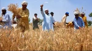ملک بھر میں گندم کی کٹائی کا سلسلہ زور و شور سے جاری ہے