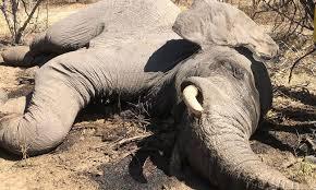 جنوبی افریقی ملک بوٹسوانا میں ہاتھیوں کی ہلاکت کا پُراسرار معمہ حل کرلیا گیا