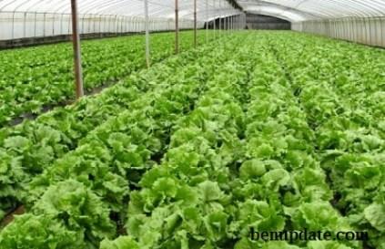 Fast Growing Crops In Nigeria