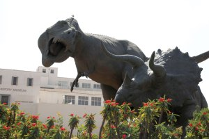 We're back · Sculptures of dinosaurs appear to do battle outside the Natural History Museum of Los Angeles County in Exposition Park, across the street from USC. The museum is attempting to expand its relationship with USC students and faculty. - Mike Lee   Daily Trojan