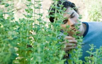 Las Lesiones Leves En La Cabeza Pueden Alterar El Sentido Del Olfato