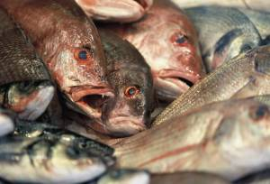 fish, fish and alzheimer's