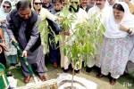 ملکی تاریخ کی سب سے بڑی شجرکاری مہم جاری، 35 لاکھ پودے لگانے کا ہدف