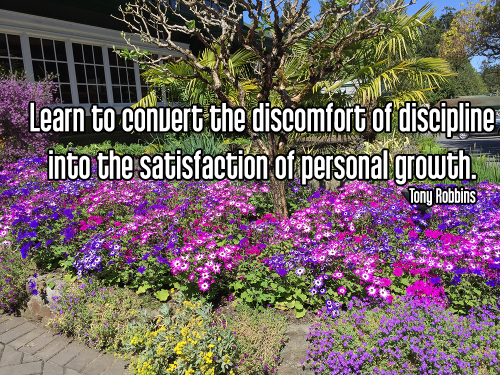 bright pink and purple flowers in garden with palm tree centerpiece and multicolored flowering bushes - tapas discipline self-disipline motivation Quote - Learn to convert the discomfort of discipline into the satisfaction of personal growth. - Tony Robbins