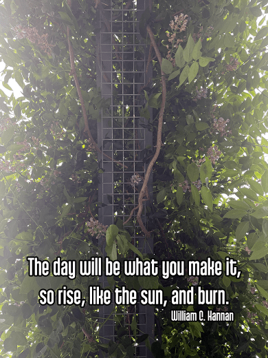 cool perspective looking up at grape vine with dark green leaves covering trellis gate with sun rays peeking through the foliate - upper limbs meditation morning routine Quote: The day will be what you make it, so rise, like the sun, and burn. - William C. Hannan