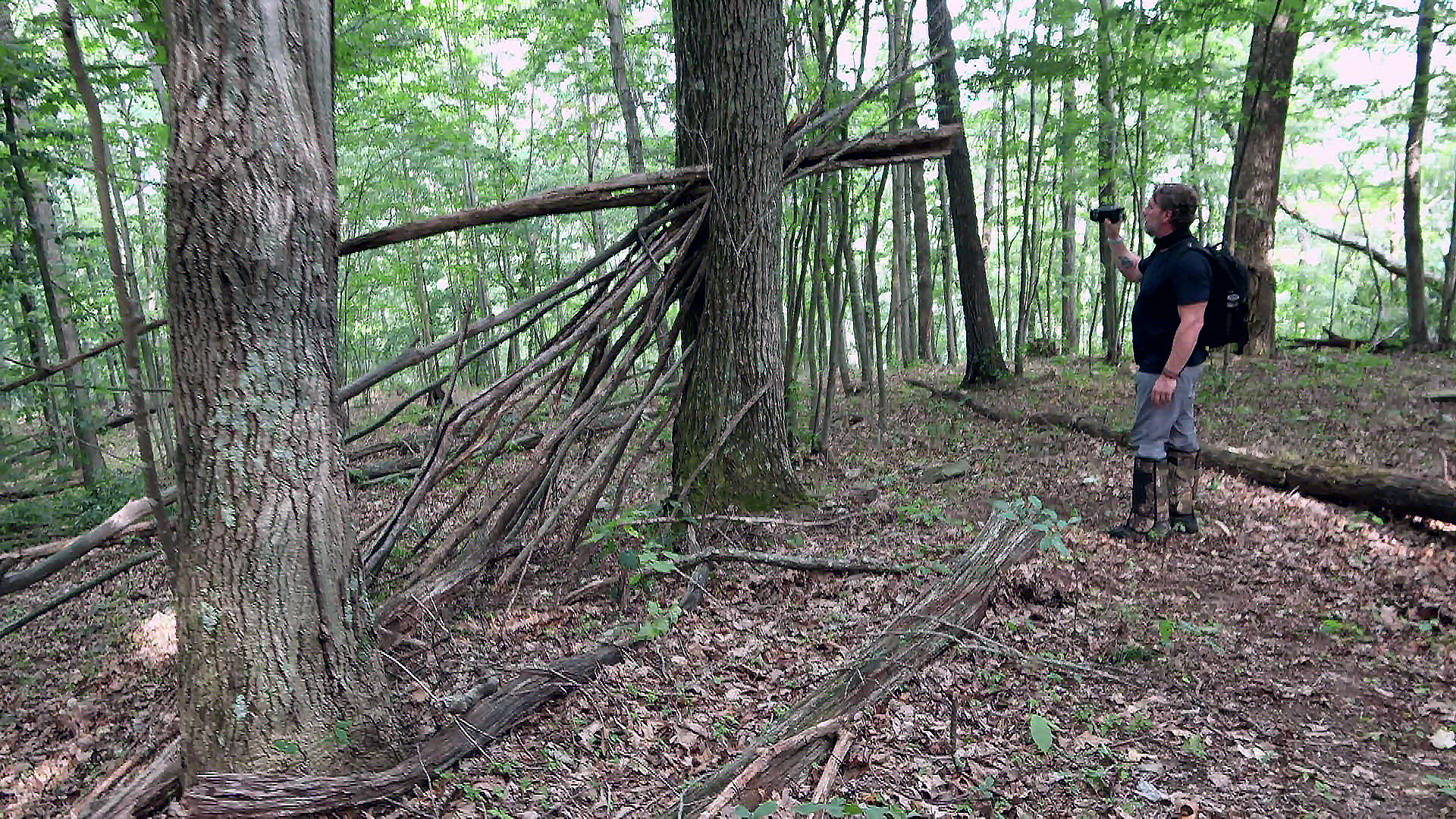 Could Kentucky's Deep Forests Hide a Piece of the 'Bigfoot Puzzle' - The Daily Yonder