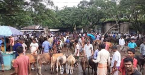 করোনা ঝুঁকি নিয়ে চলছে জগন্নাথপুরে মাস্কহীন পশুর হাট