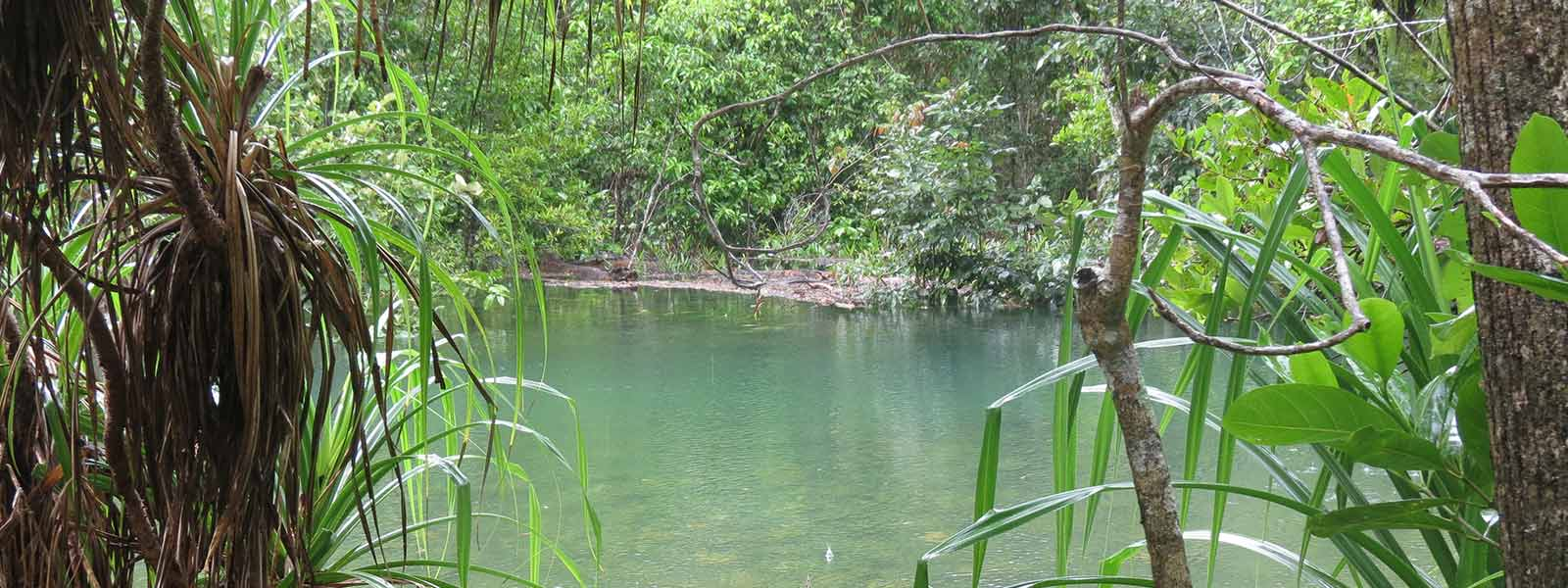 daintree-safaris-waterhole
