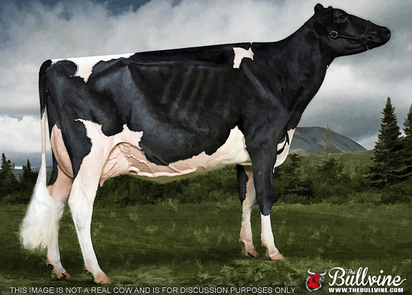Why are dairy cows skinny?
