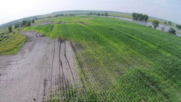 The bald spots are where the corn we planted drowned after too much rain this spring.