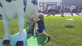"""Try milking a """"cow""""!"""