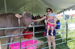 Annabell the Brown Swiss made some new friends at the 2016 Kewaunee County Breakfast on the Farm! #LoveBOTF 2016