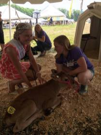 Making new furry-friends at the 2017 Kewaunee County Breakfast on the Farm