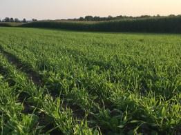 Kinnard_Farms-KF_Crops3