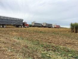 Kinnard_Farms-KF_Harvest3