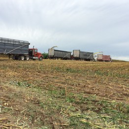 Kinnard_Farms-KF_Harvest3