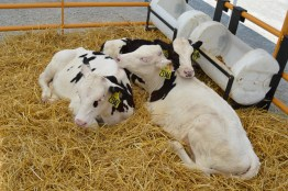 Kinnard_Farms-KF_Triplets