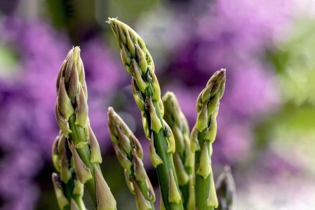 Asparagus. & shoots. Purple flowers in background.