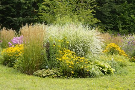 When to plant A perennial flowerbed with pampass grass, yarrow and other flowers.