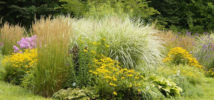 A perennial flowerbed with pampass grass, yarrow and other flowers.