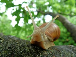 Snail on tree branch.