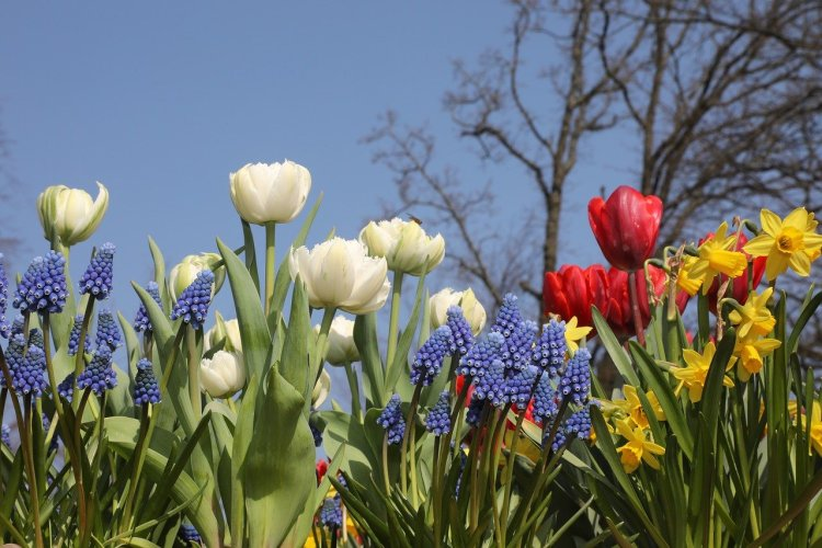 Spring blooming flowers in white, red, and purple. Tree in the background with blue sky.