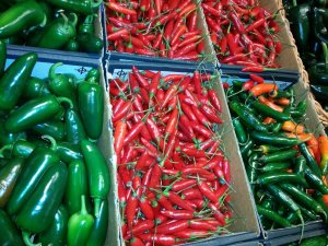 Jalapeno, serreno, and other hot peppers sorted into six different bins.