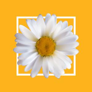 Daisy Daily Consulting logo