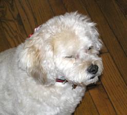 daisy looks annoyed!