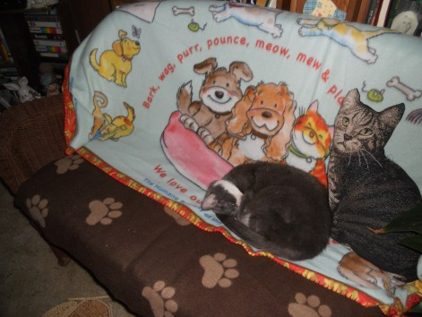 """DAISY MAE ALL CURLED UP SLEEPING ON HER """"THRONE""""."""