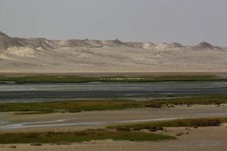 #DakhlaRovers #desert #sea #RAMSAR