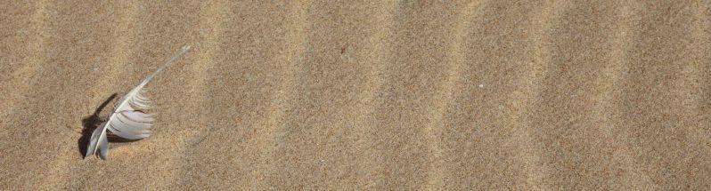#DakhlaRovers #sea #desert