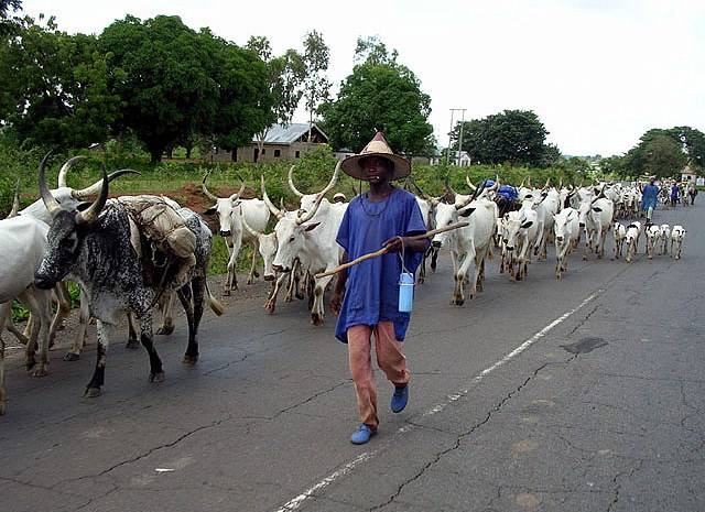 10 Armed Fulani herdsmen arrested in Ekiti