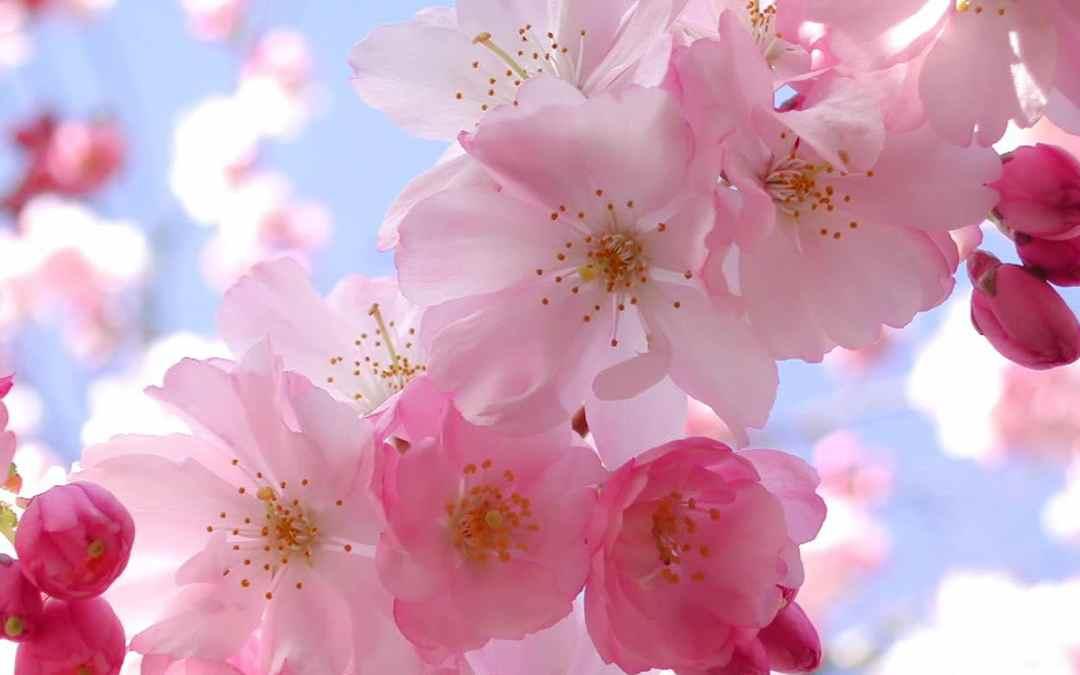 Pénétrez dans le cycle du printemps avec le Reiki