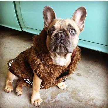 Does this coat make me look fat?