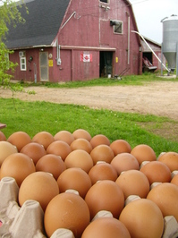farm-fresh-eggs-1235249