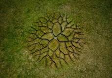 world-tree-land-art-1