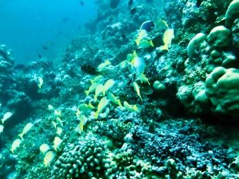 Feryna Wazheri's trip to Maldives (12)