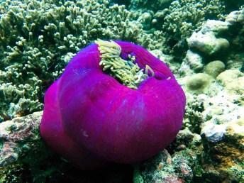 Feryna Wazheri's trip to Maldives (13)