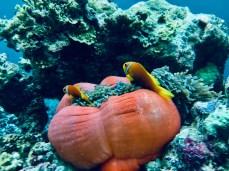 Feryna Wazheri's trip to Maldives (16)