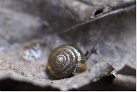snail_on_the_run_1_thumb