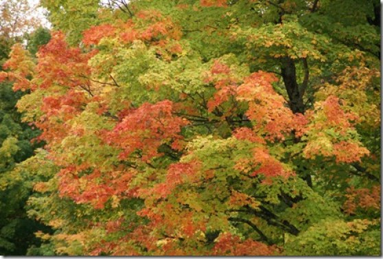 Fall_color_3
