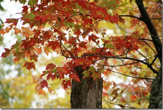 Fall_color_5