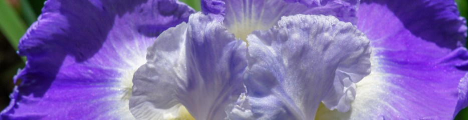 Three Irises and Two Owls