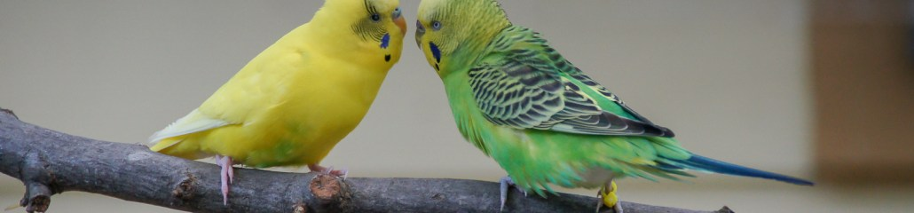 Feathers on Friday: Zoo Atlanta Parakeets