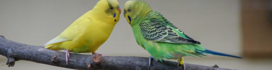 Feathers on Friday: Zoo Atlanta Parakeets