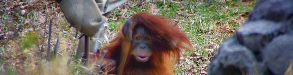 Does This Fur Make Us Look Orange?