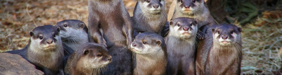 Wordless Wednesday: Made You Look! (Otter Humor)