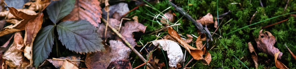 Single Frame: Autumn Close Up #8